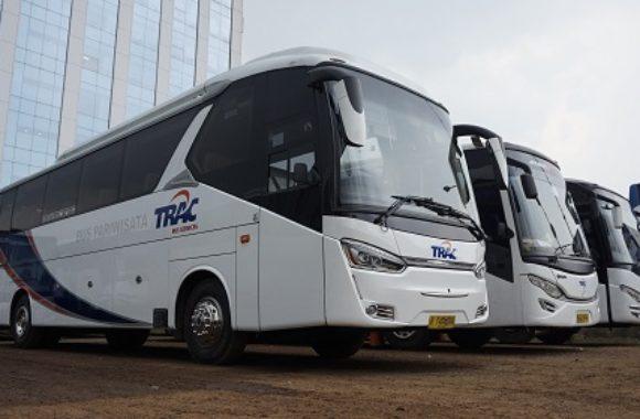 sewa bus pariwisata trac big bus